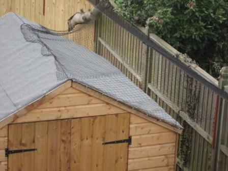 Shed after cat fencing